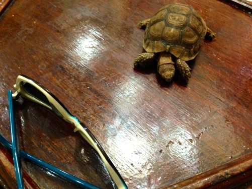 He had natural remedies for mosquitos, cellulite, weight loss, and stuffy noses. He asked me to sit in front of the fan for the demonstration and wanted me to hold this turtle--no idea why. When I declined, he placed it in my lap.
