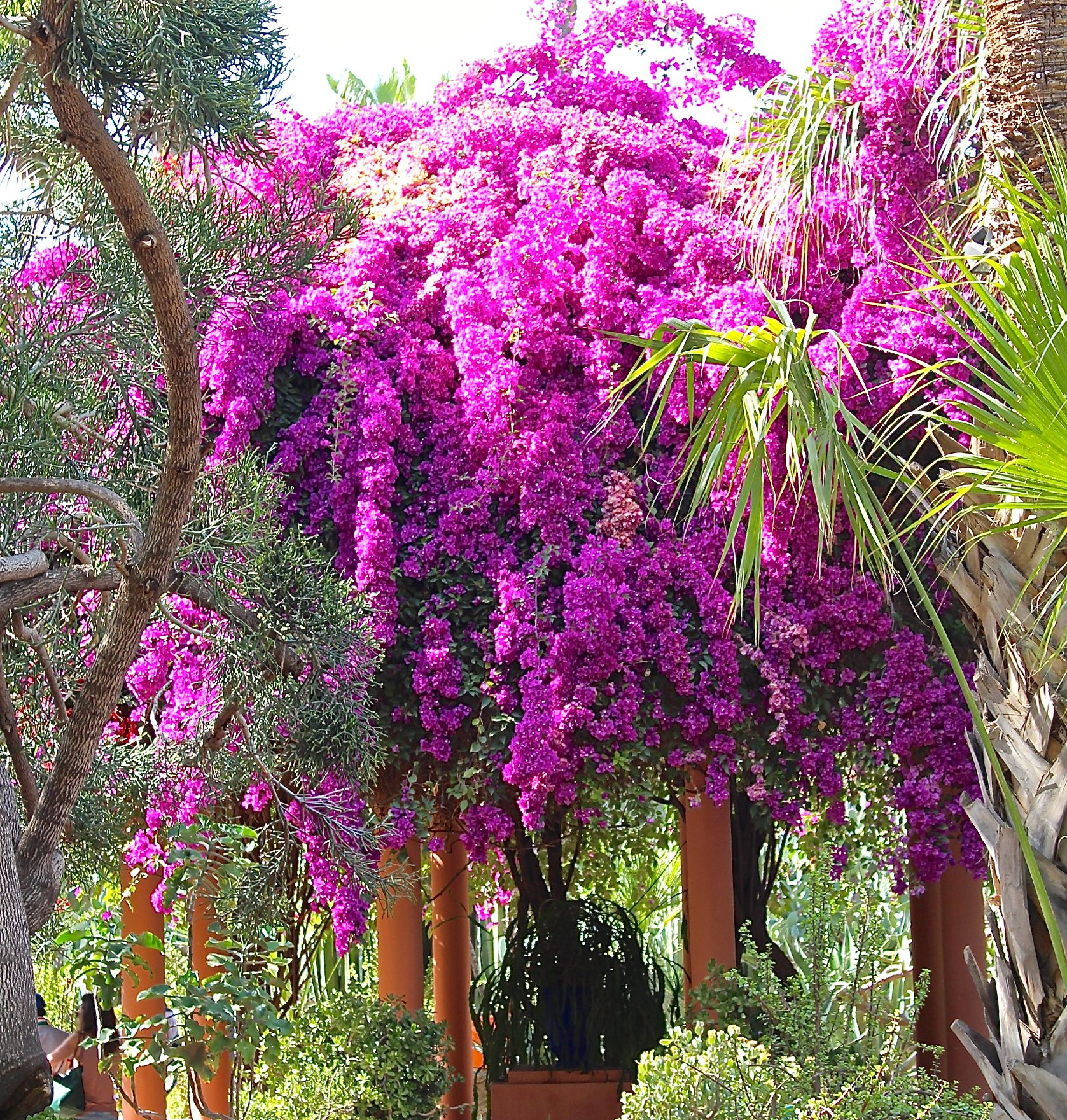 Jardin majorelle my backyard blooms southern girl gone for Jardin majorelle