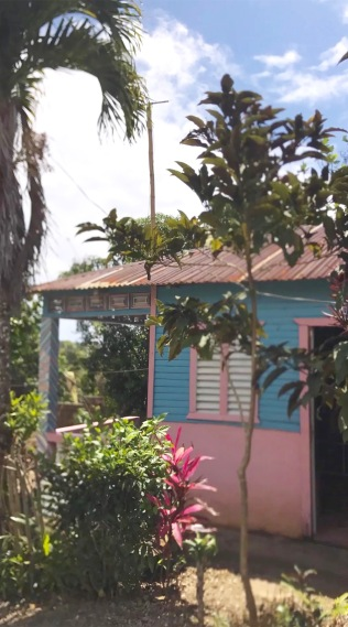pink house (1)