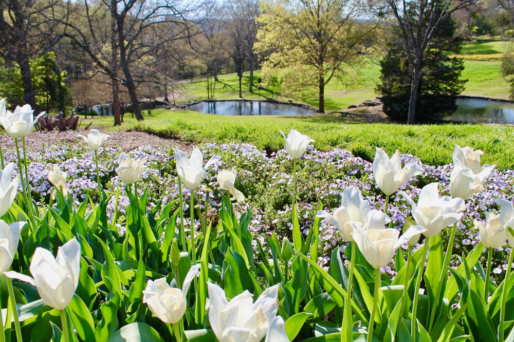 What\'s Happening in Nashville: Cheekwood in Bloom – southern girl ...
